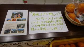 DSC_9059.JPG