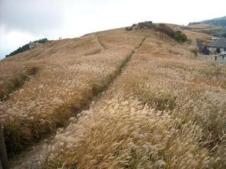 秋の生石高原.jpg