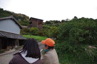 みかん山と貯蔵蔵.JPG