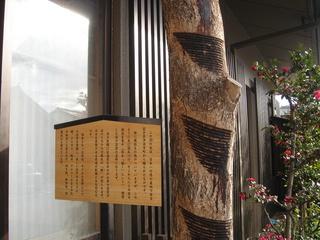 kaiurushinoki