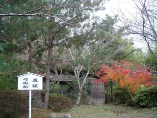 kaiyoshitsune