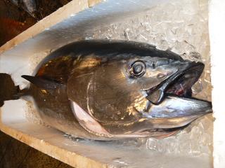 111228魚市4.JPG